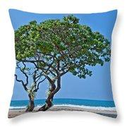 Two Heliotrope Trees On Tropical Beach Art Prints Throw Pillow