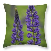 Two Lupine Throw Pillow