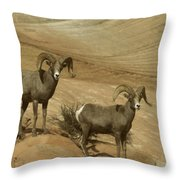 Two Male Rams At Zion Throw Pillow