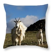 Two Mountain Goats Oreamnos Americanus Throw Pillow