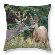Two Mule Deer Bucks With Velvet Antlers Interact Throw Pillow