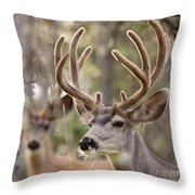 Two Mule Deer Bucks With Velvet Antlers  Throw Pillow