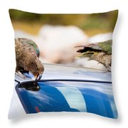 Two Nz Alpine Parrot Kea Trying To Vandalize A Car Throw Pillow