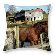 Two Quarter Horses In A Barnyard Throw Pillow