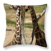 Two Reticulated Giraffes - Giraffa Camelopardalis Throw Pillow