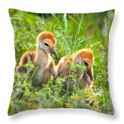 Two Sandhill Crane Chicks Throw Pillow