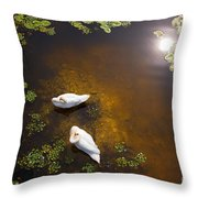 Two Swans With Sun Reflection On Shallow Water Throw Pillow