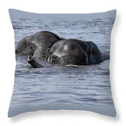 Two Swimming Elephants Throw Pillow