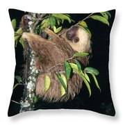Two-toed Sloth Choloepus Didactylus Throw Pillow