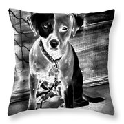 Two Tone Toby-jack Russell Throw Pillow