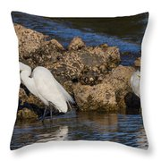 Two White Herons And A Coot Throw Pillow