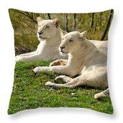 Two White Lions Throw Pillow