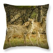 Two White Tailed Deer Throw Pillow