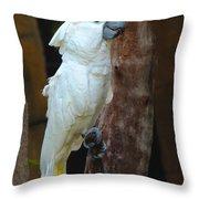 Umbrella Macaw Throw Pillow