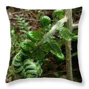 Uncurling Throw Pillow