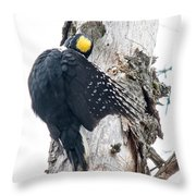 Under Cover Black-backed Throw Pillow