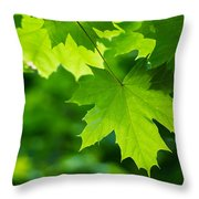 Under The Maple Leaves - Featured 2 Throw Pillow