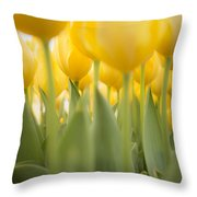 Under Yellow Tulips - 8x10 Format Throw Pillow
