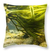 Underwater Shot Of Green Seaweed Attached To Rock Throw Pillow