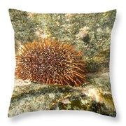 Underwater Shot Of Sea Urchin On Submerged Rocks Throw Pillow