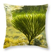 Underwater Shot Of Seaweed Plant Surface Reflected Throw Pillow