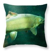 Underwater Shot Of Trophy Sized Tiger Trout Throw Pillow