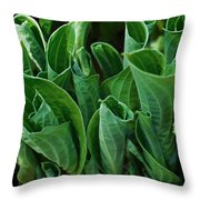 Unfurling Of The Hosta Throw Pillow