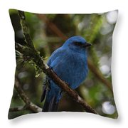 Unicolored Jay Throw Pillow