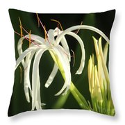 Beauty All Around Us Throw Pillow