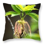Unknown Tree Flower Throw Pillow