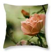 Unraveling Beauty Throw Pillow by Kelly Rader