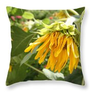 Unripe Sunflowers Throw Pillow