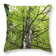 Up The Oak Tree Throw Pillow