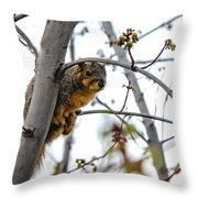Up The Tree Throw Pillow by Robert Bales