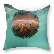 Upside-down Jellyfish Cassiopea Throw Pillow