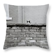 Curiosity Of The Cat Throw Pillow