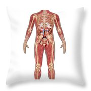 Urinary, Skeletal & Muscular Systems Throw Pillow