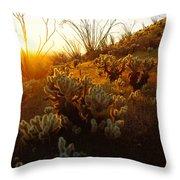 Usa, Arizona, Sonoran Desert, Ocotillo Throw Pillow
