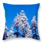 Usa, Oregon, Pine Trees, Winter Throw Pillow