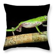 Vaillantis Monkey Frog Throw Pillow