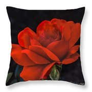 Valentine Rose Throw Pillow by Robert Bales