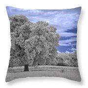 Valley Oak #2 Throw Pillow
