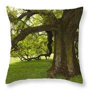 Valley Oak Throw Pillow