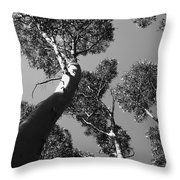 Valley Of The Giant Tingles Bw Throw Pillow