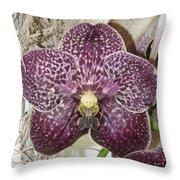 Vanda Robert's Delight Throw Pillow
