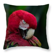 Vanity-close Up Of A Green Winged Macaw Throw Pillow
