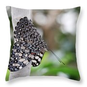 Variable Cracker Butterfly Throw Pillow
