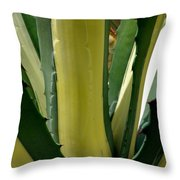Variegated Agave Throw Pillow