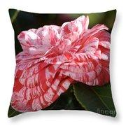 Variegated Camellia Throw Pillow