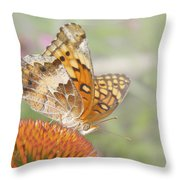 Variegated Fritillary On Cone Flower Throw Pillow